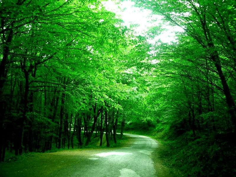 Belgrad Ormanı – İstanbul | Adını, Kanuni Sultan Süleyman'ın Belgrad Seferinden Dönerken ..
