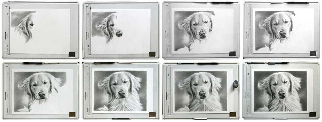 imaginee linda huber graphite pencil artist realistic drawings